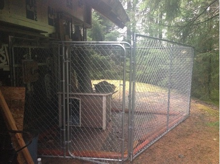 Chain Link Dog Kennel and Dog House